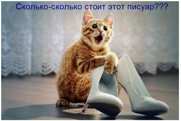 самые смешные фото кошек