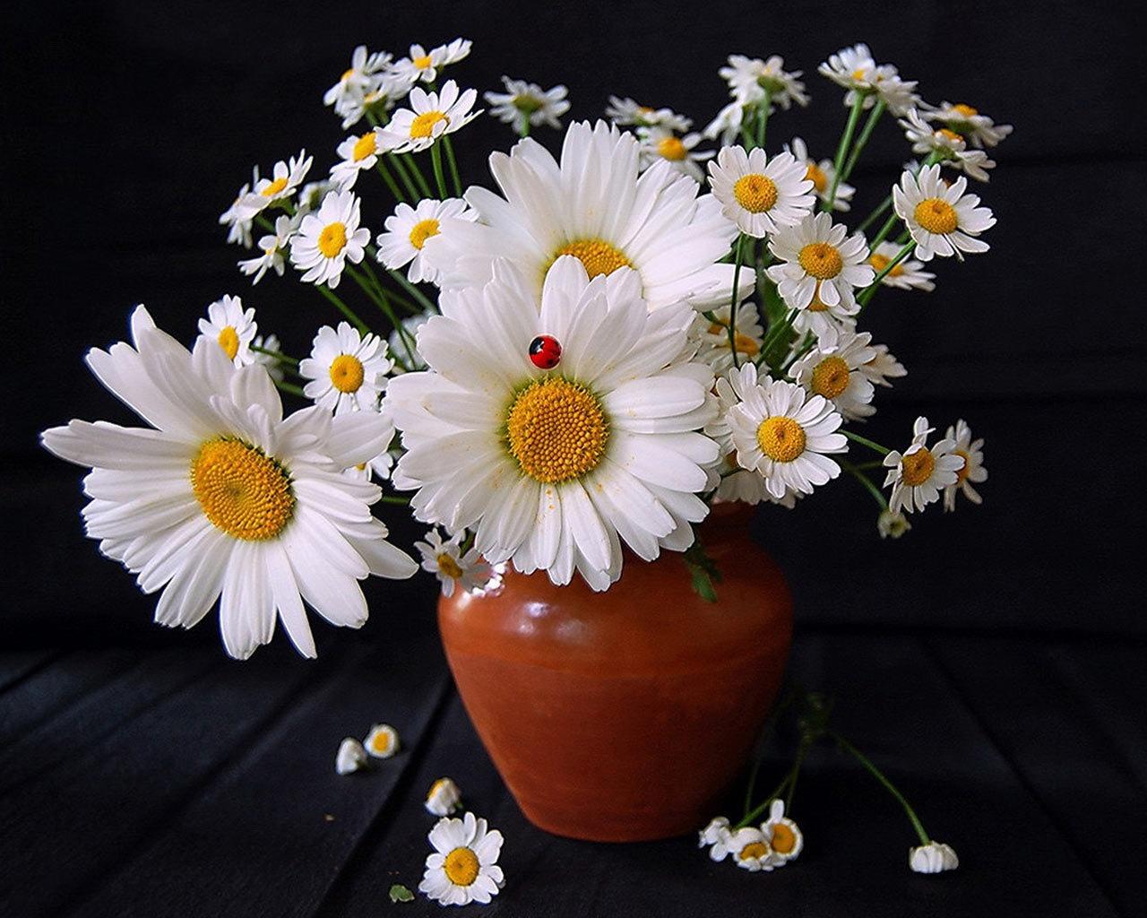 красивые детские стихи про цветы ромашки с фото
