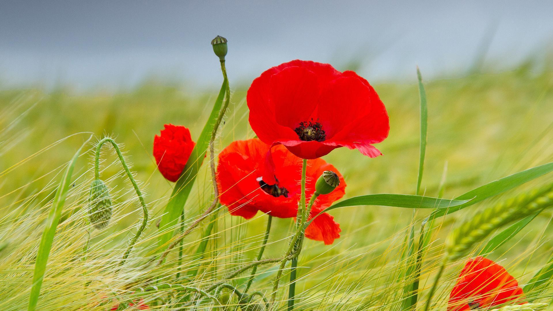 Красивые детские стихи про цветы короткие с фото