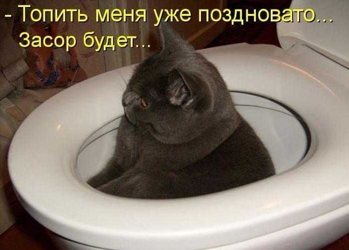 прикольные фото котов и кошек, демонтиваторы