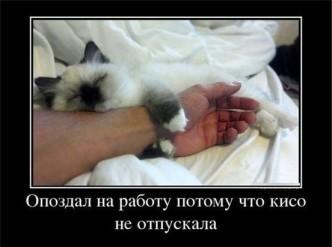 смешные фото котов и кошек, демонтиваторы