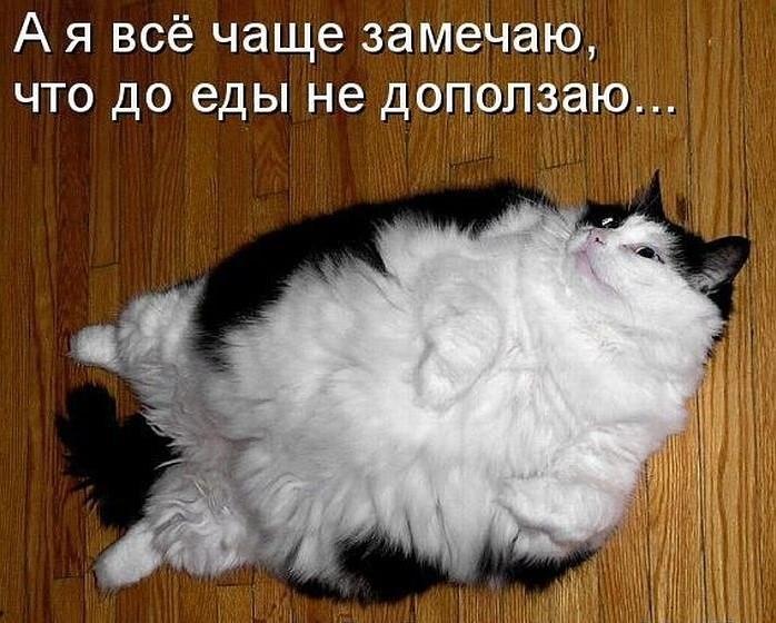 забавные фото котов и кошек, демонтиваторы