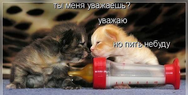 смешные фото котят и кошек, демонтиваторы