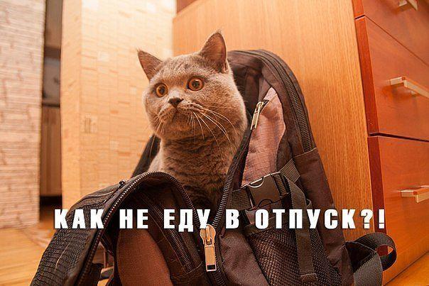 забавные фото кошек с надписями