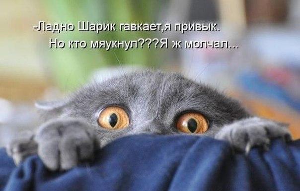 Смешные фото котят и кошек