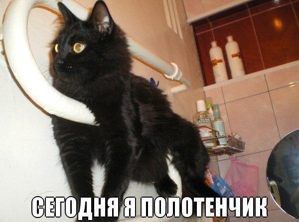 Забавные фото котов и кошекс надписями