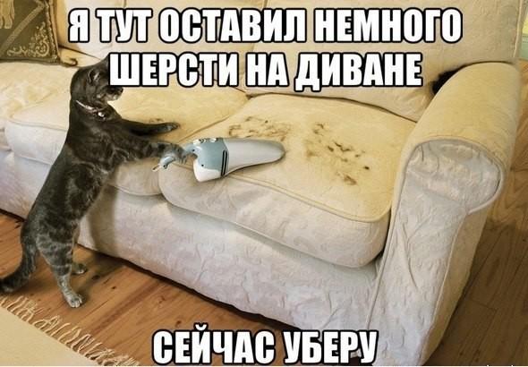 Забавные фото кошек и котов с надписями