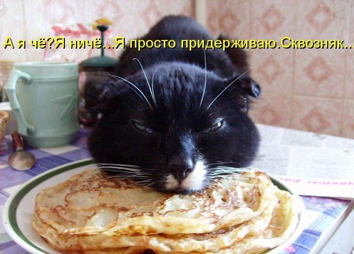 забавные фото котов и кошек с надписями
