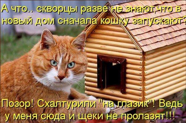 картинки с рыжими котами прикольные