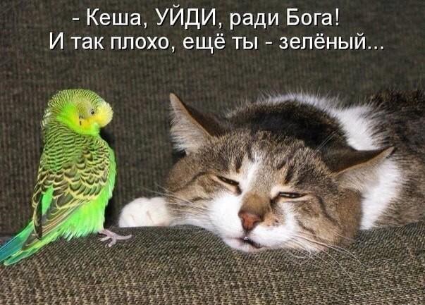 смешные фото с котами и кошками