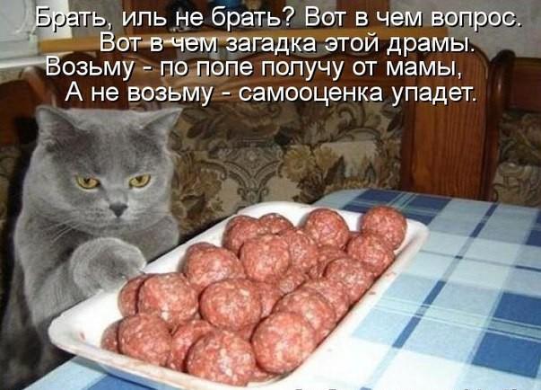 забавные фото котов и котят с надписями