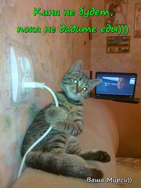 http://lisimnik.ru/wp-content/uploads/2013/11/NWHn4jwPlvs.jpg