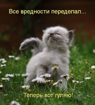 прикольные фото котят с надписями
