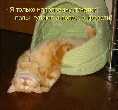Фотки с рыжими котами