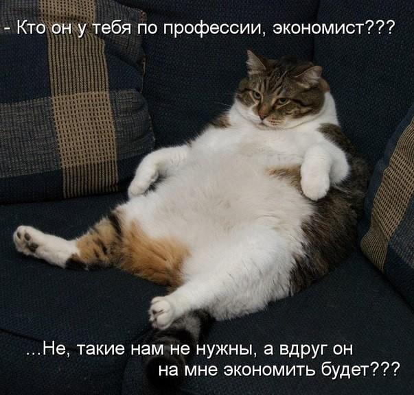 смешные фото с толстыми котами
