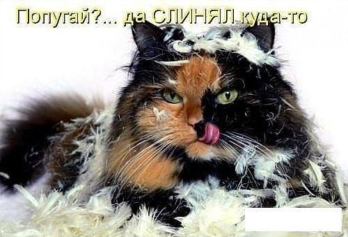 смешные фото кошек и котят с надписями
