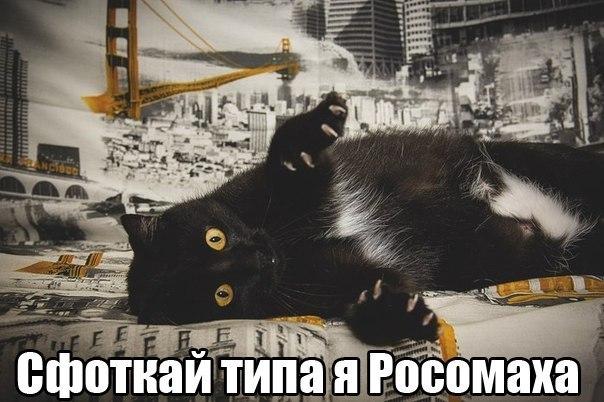 забавные фото кошек и котят с надписями