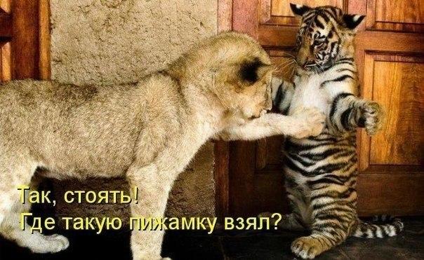 http://lisimnik.ru/wp-content/uploads/2013/11/jW6xYuAWJsE.jpg