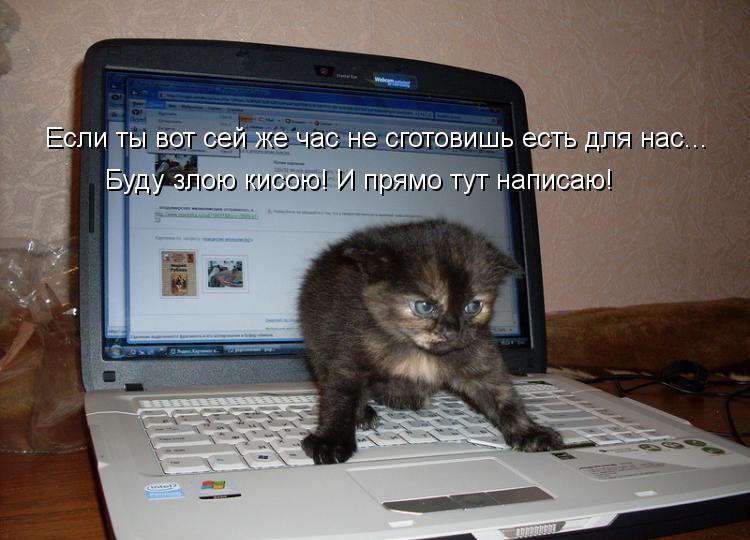 самые смешные фото котят с надписями