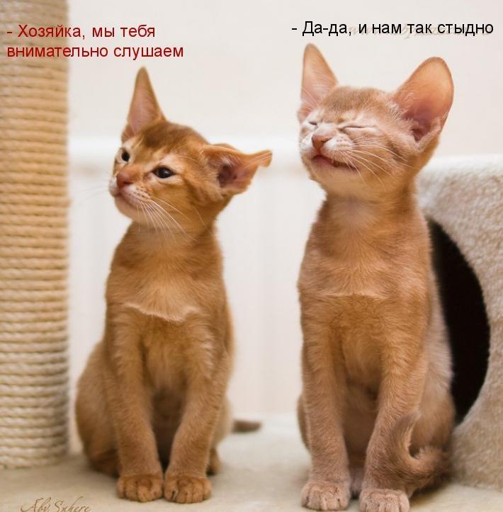 забавные фото котят с надписями