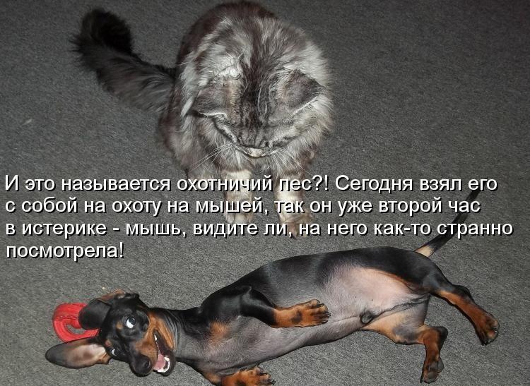 демонтиваторы, смешные фото животных