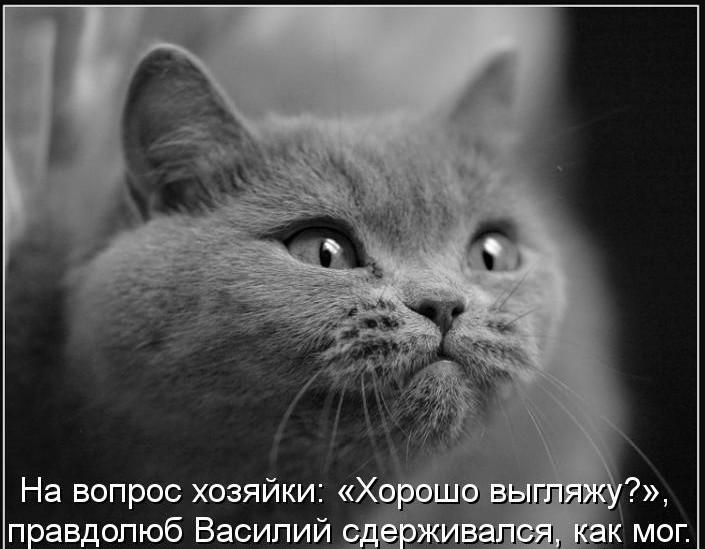 http://lisimnik.ru/wp-content/uploads/2013/11/kotomatritsa_hH-e1384650027958.jpg