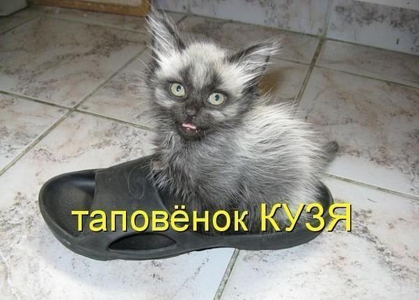 самые забавные фото котят с надписями