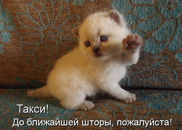 смешные фото котят с надписями