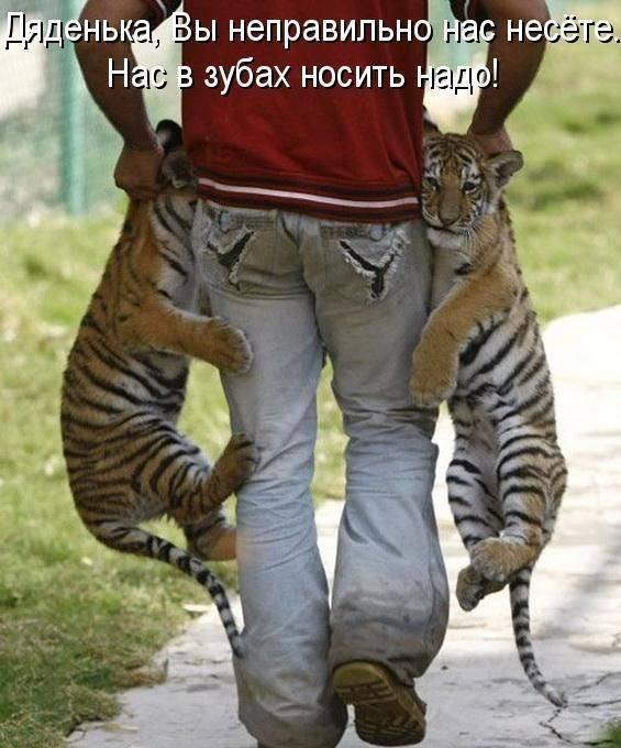 смешные картинки животных фото