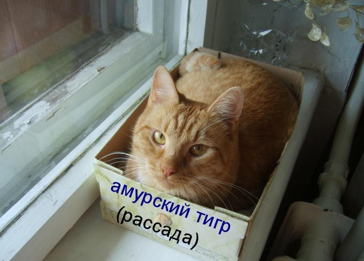 фото котов с смешными надписями