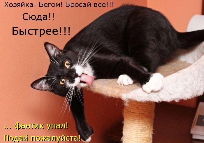 забавные  фото котов с смешными надписями