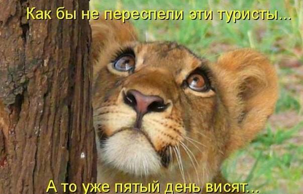 смешные фото животных с подписями