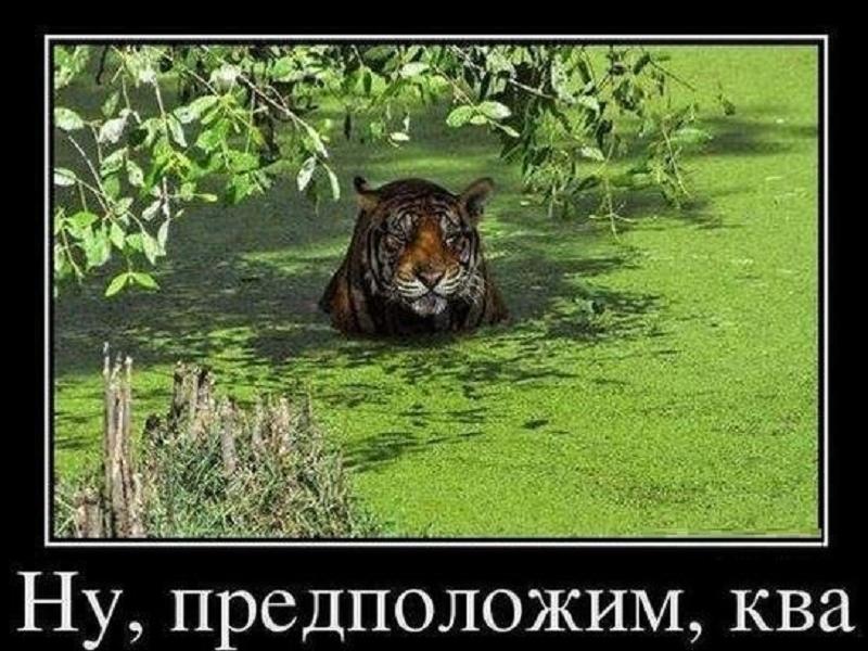 http://lisimnik.ru/wp-content/uploads/2013/12/TkTqZ5xxFFQ.jpg_resize.jpg