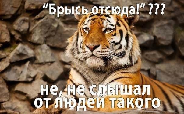 фото приколы смешные про животных
