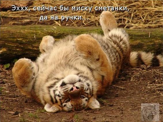 Фото приколы смешные про животных -: lisimnik.ru/2013/12/foto-prikoly-smeshnye-pro-zhivotnyx