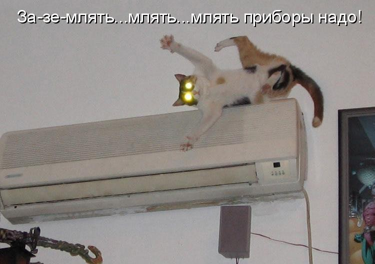 Самые смешные фото котов и кошек