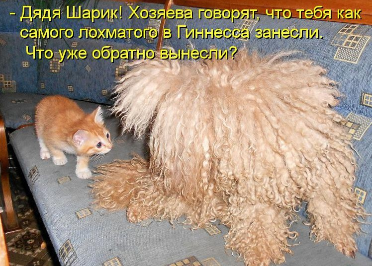 http://lisimnik.ru/wp-content/uploads/2013/12/kotomatritsa_6r-e1388270220268.jpg