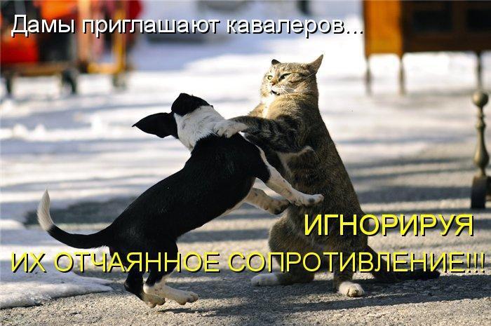 смешные фото кошек и собак