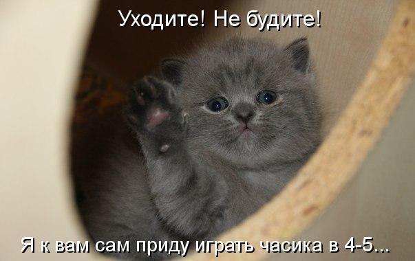 смешные маленькие котята фото