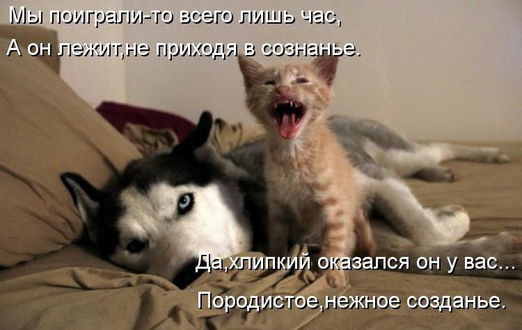 фото котят и щенят смешные