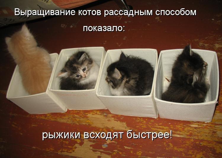 http://lisimnik.ru/wp-content/uploads/2013/12/kotomatritsa_xz-e1386783626226.jpg
