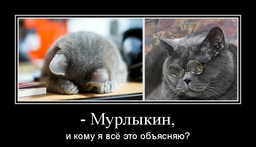 прикольные кошки фото с надписями