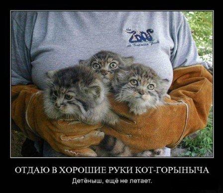 смешные фото котят с надписями, демотиваторы