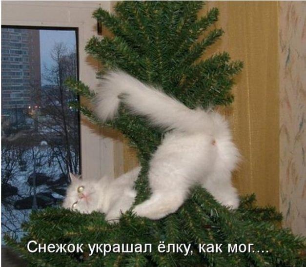 смешные новогодние фото с котами