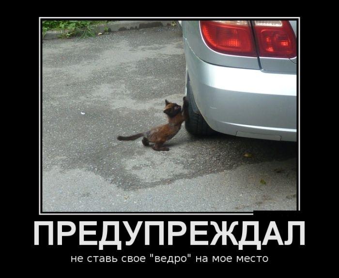 прикольные фото котят с надписями, демотиваторы
