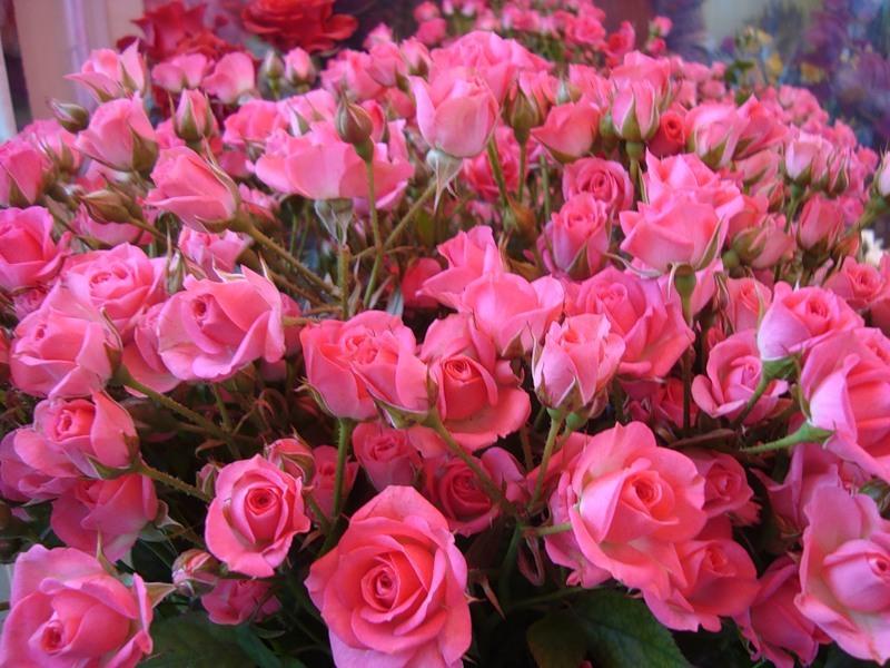 цветут розы зимой