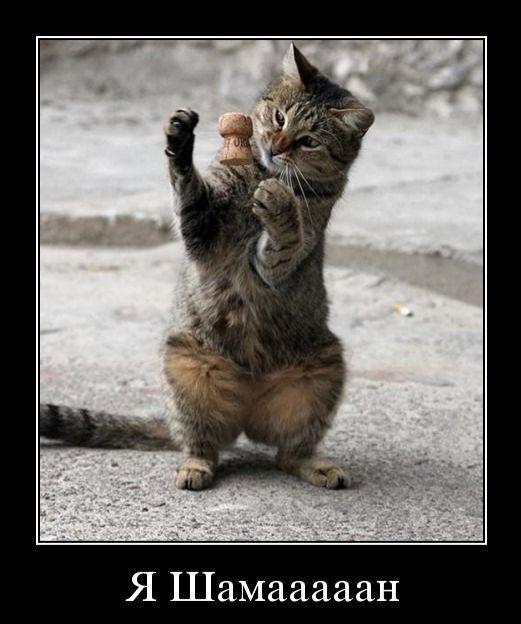 приколы про кошек фото с надписями