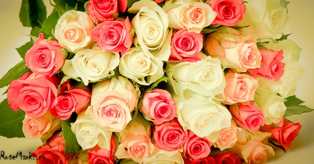 розы зимой картинки