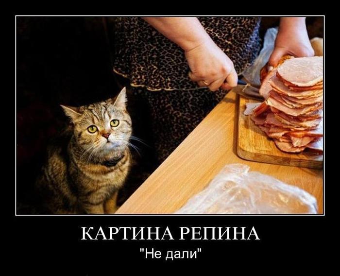 смешные фото кошек с надписями, демотиваторы