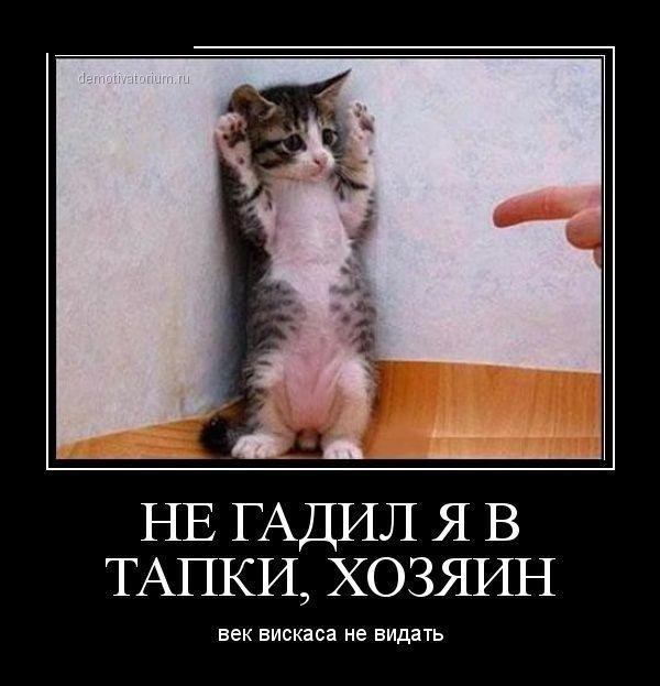 смешные фото котятс надписями, демотиваторы